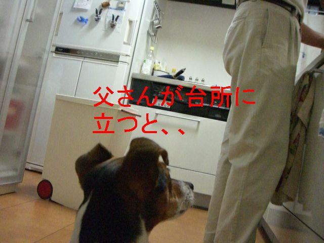 f0053952_109427.jpg