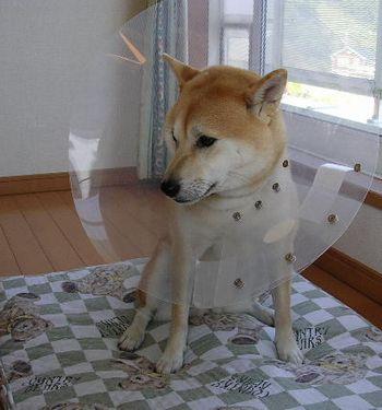 2006年10月10日(火)・・・愛ちゃんのブルーな日_f0060461_20531884.jpg