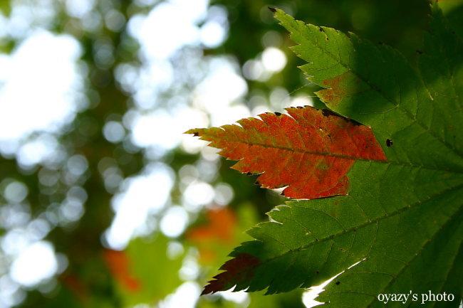 秋を君に・・_a0071514_2256415.jpg