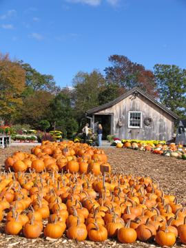 Pumpkin! Pumupkin! Oh,pumpkins!_b0081419_9411654.jpg