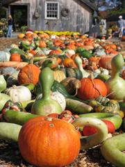Pumpkin! Pumupkin! Oh,pumpkins!_b0081419_9415740.jpg
