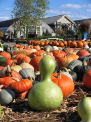 Pumpkin! Pumupkin! Oh,pumpkins!_b0081419_9493517.jpg