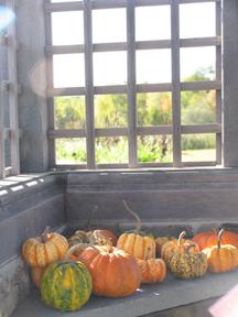 Pumpkin! Pumupkin! Oh,pumpkins!_b0081419_950141.jpg