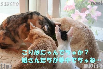 f0063729_14571642.jpg