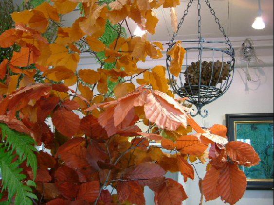 オークリーフ(パールツリー、秋の実物)_f0049672_12402188.jpg