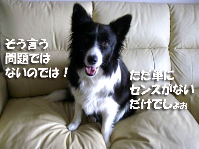 d0082104_1421359.jpg