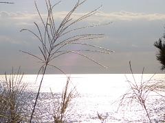 葉山 写真撮影会作品 各賞発表と講評_d0046025_17441992.jpg