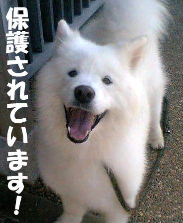 フェリーチェの笑顔を守って!_c0062832_1520425.jpg