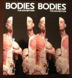 2006-10-11 BODIES@South Street Seaport Exhibition Ctr_e0021965_12384496.jpg
