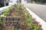 木花小学校の花の植栽のその後_f0105533_0393959.jpg