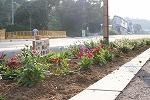 木花小学校の花の植栽のその後_f0105533_0404961.jpg