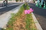 木花小学校の花の植栽のその後_f0105533_051102.jpg