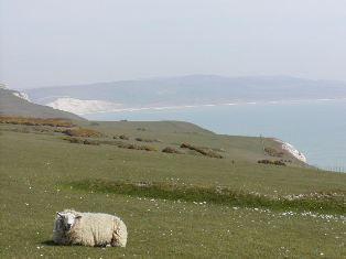 ワイトト島 Isle of Wight_d0026822_11372762.jpg