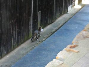 トラ猫が何かを咥えて、背中を向けて向こうへ足早に歩いていく様子。咥えた獲物の大きさに満足なのか、その姿は威厳さえ感じられ・・・。