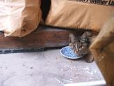 子猫さん_b0072459_1831795.jpg