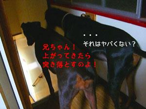 f0025769_191421.jpg