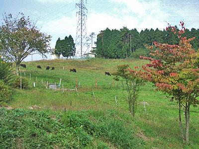 秋のピクニック_c0085273_2215635.jpg