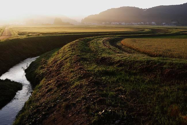 田園の朝_b0074098_21284076.jpg