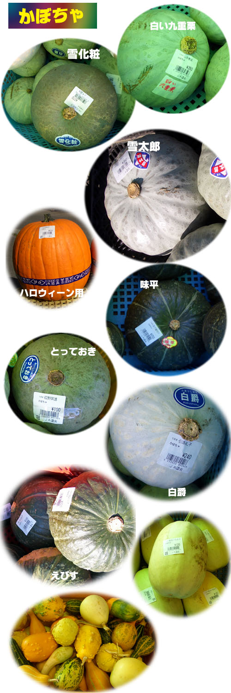 かぼちゃのいろいろ_b0019313_1803725.jpg