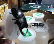 黒いダイヤ_f0048422_22465017.jpg