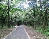 木もれびの森!_f0077727_910476.jpg