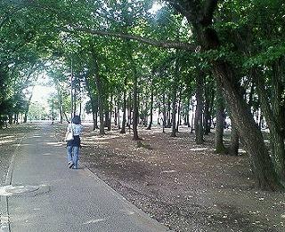 木もれびの森!_f0077727_972724.jpg