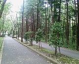木もれびの森!_f0077727_995679.jpg