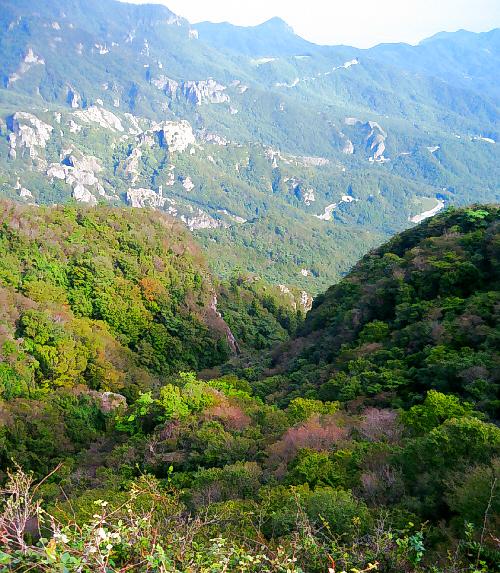 こちらは山間の木々の風景。こちら側だけ眺めたら、静かな海が広がっているのが信じられないような緑の深さです。どこか異国の山のようにも見えます。