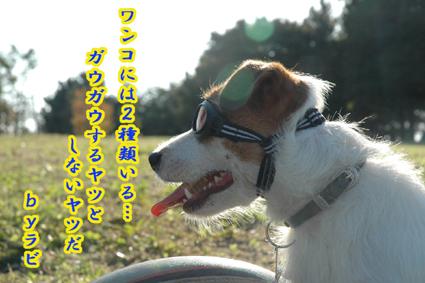 f0035044_17553489.jpg
