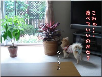 b0078073_9223580.jpg