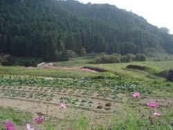 美しい日本の田舎_f0106597_010293.jpg