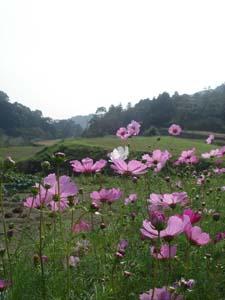 美しい日本の田舎_f0106597_0152033.jpg