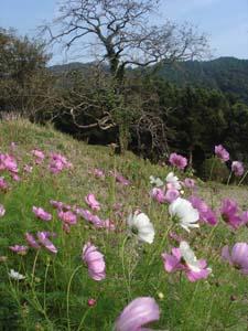 美しい日本の田舎_f0106597_0172983.jpg