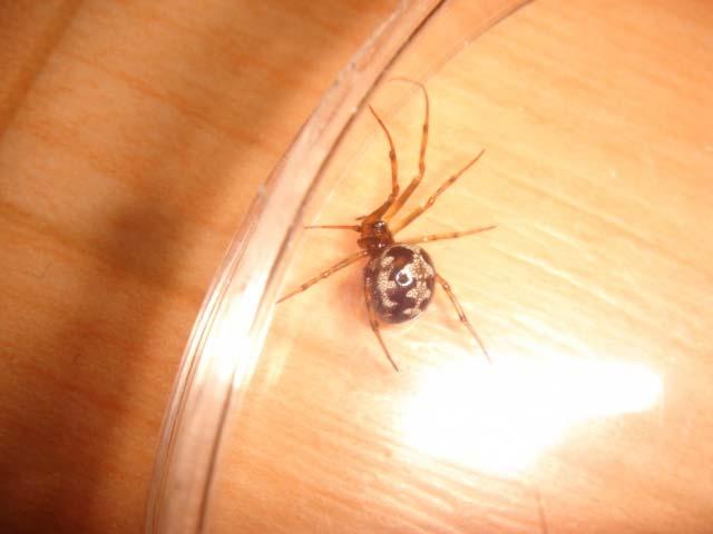 マンションにたくさんのクモが巣を作っています_b0025008_2120422.jpg