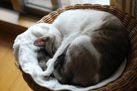 新しい猫ベッド_a0020021_0163646.jpg