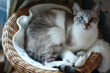 新しい猫ベッド_a0020021_016427.jpg