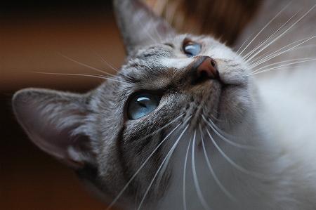新しい猫ベッド_a0020021_017296.jpg