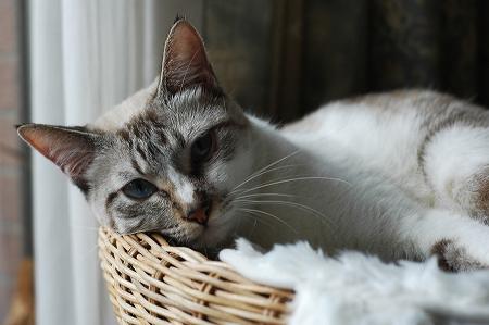 新しい猫ベッド_a0020021_017921.jpg