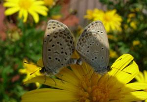 秋深まりし庭の虫たち_e0097534_10412985.jpg
