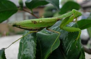 秋深まりし庭の虫たち_e0097534_10495087.jpg