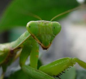 秋深まりし庭の虫たち_e0097534_1051412.jpg