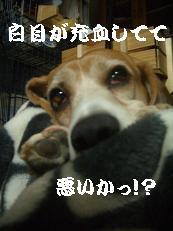 b0098660_0253758.jpg