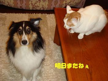 f0046854_20114622.jpg