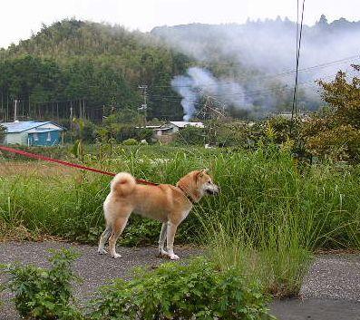 2006年10月17日(火)・・・愛ちゃんは絶好調_f0060461_10143935.jpg