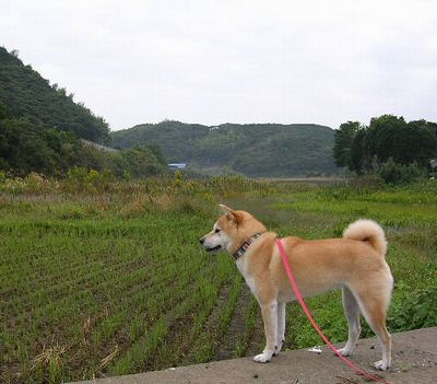 2006年10月17日(火)・・・愛ちゃんは絶好調_f0060461_10223064.jpg