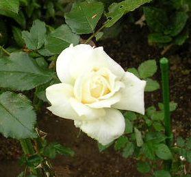 2006年10月17日(火)・・・愛ちゃんは絶好調_f0060461_10244813.jpg