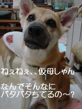 f0086814_1485741.jpg