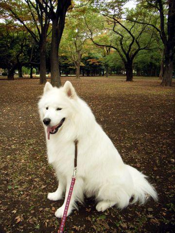 渋谷でティッシュ?_c0062832_17274696.jpg