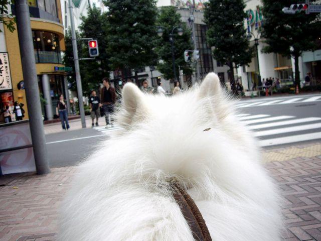 渋谷でティッシュ?_c0062832_1783912.jpg