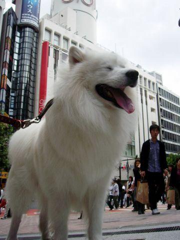 渋谷でティッシュ?_c0062832_1791282.jpg